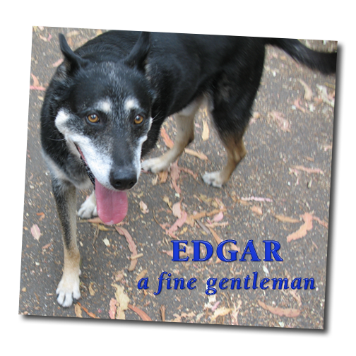 Edgar the dog